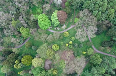 Picture taken by mini-plane of trees