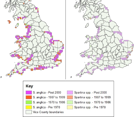 Distribution of common cord-grass Spartina anglica in England