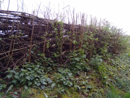 Mapping the Gower's hedgerows